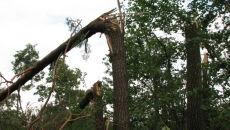Po burzach. Uszkodzone 5 tys. hektarów lasów