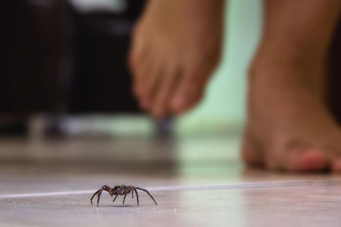 Gatunki pająków w Polsce. Które możesz spotkać w domu lub w ogrodzie?