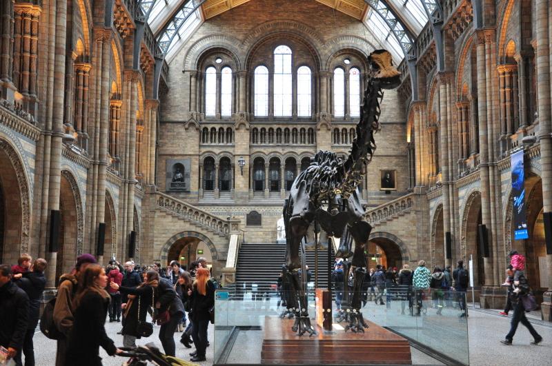 Dippy w Londyńskim Muzeum Historii Naturalnej (foto: Anita Piątek)