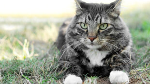 Stresujesz się? Pogłaszcz kota