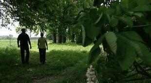Duży ogród ze starą aleją kasztanowcową, odc. 402